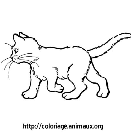 Gut gemocht Dessin de chat - Animozone.fr MU37
