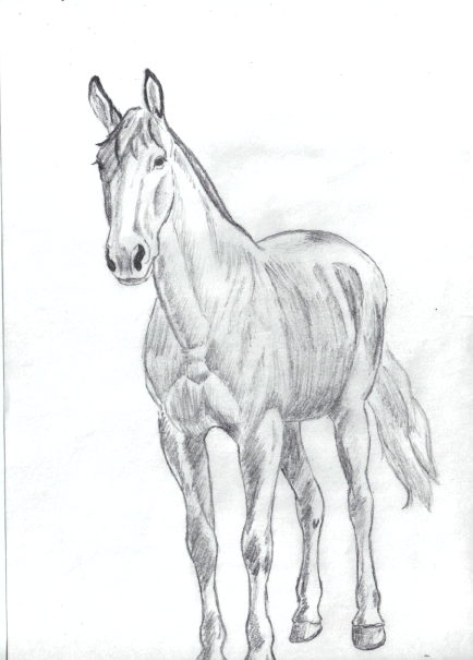 cheval (6)
