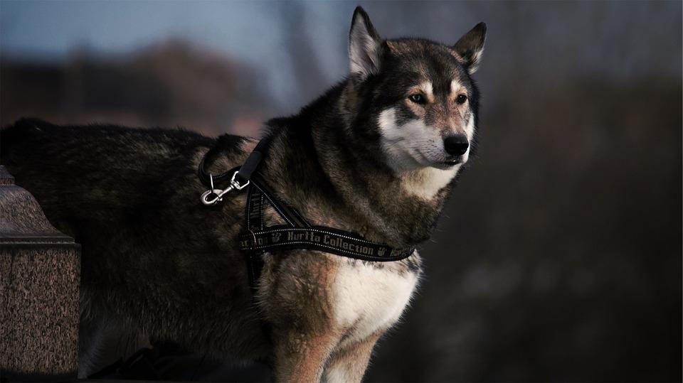 chien (11)