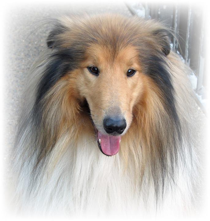 chien (4)