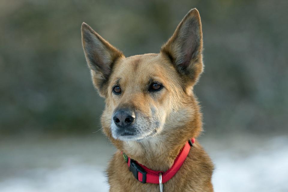 chien (5)