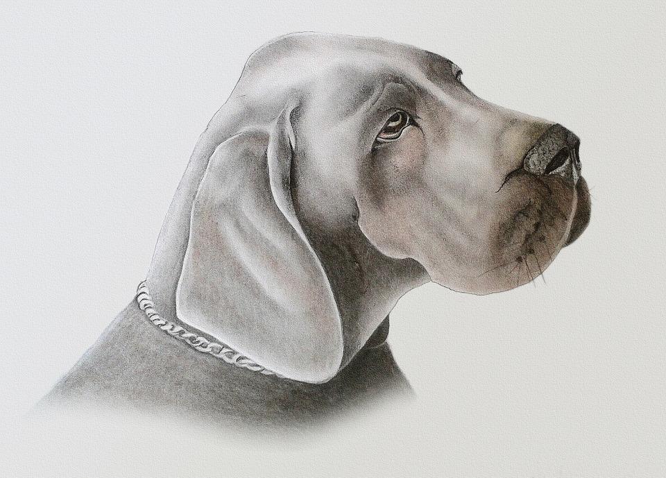 chien22